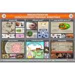 Электрифицированный стенд «Эпизоотология сельскохозяйственных животных»