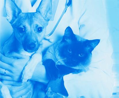 Ветеринарные стенды и тренажеры